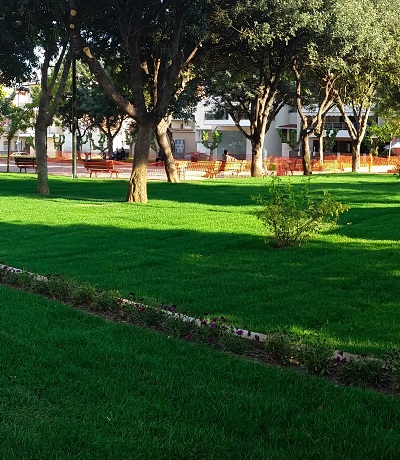 Alphasod Ready Sod Lawn